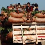 Misiones: 8 víctimas de la precarización laboral